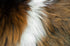 guinea pig fur close up