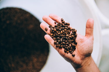 hand full of roasted coffee