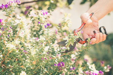 hand grips a gardening tool to cut back a plant