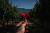 hand holding red flower in front of orchard