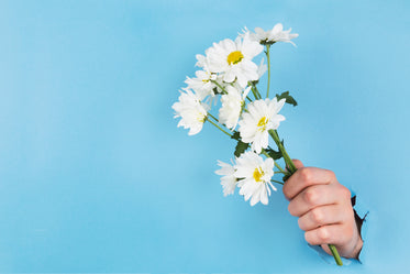 hand holds daisies through paper
