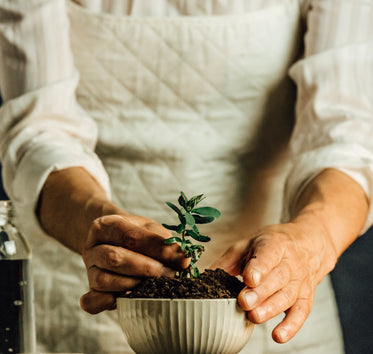 hands plant a seedling into a white bowl