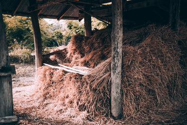 hay stack in small shack