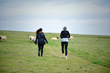 hikers in filed with sheep