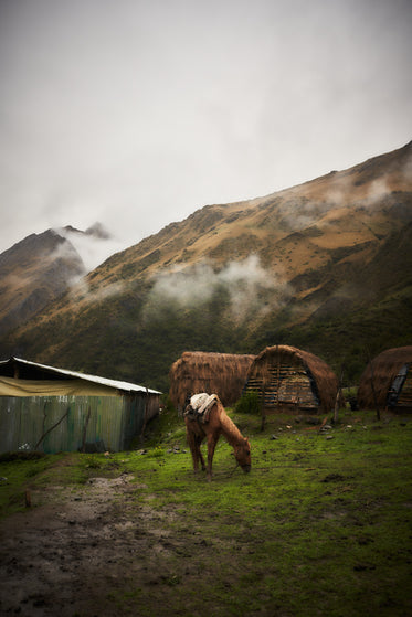 horse grazes in front of cloudy mountains