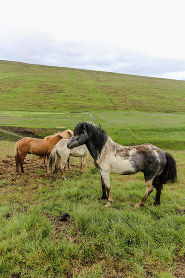horses stand together on green plains
