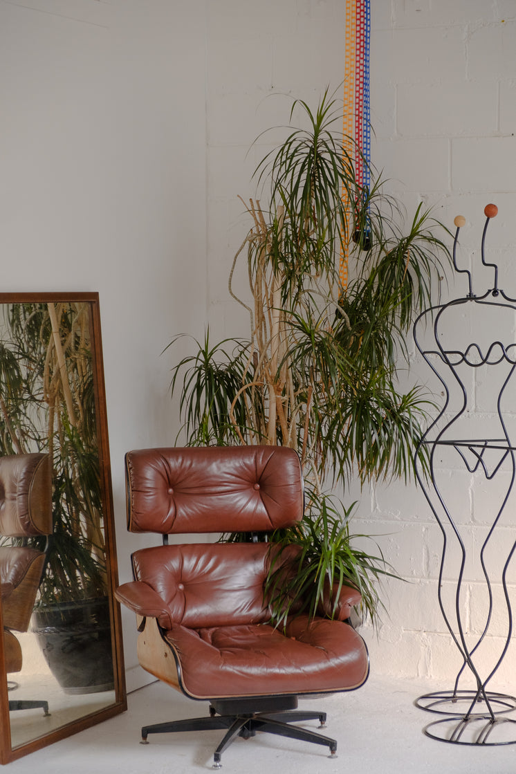House Plant Hugs A Red Leather Chair