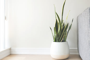 house plant in white pot