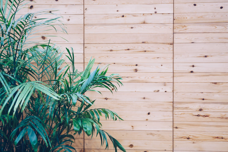 House Plant On Wooden Slat Wall