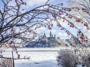 ice coated branches by canadas parliament