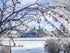 Browse Free HD Images of Ice Coated Branches By Canadas Parliament
