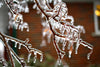 icy glass branches