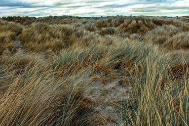 Free Ireland Grasslands Photo — High Res Pictures