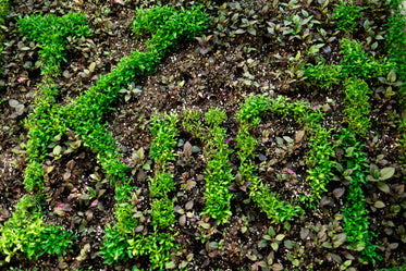 knot written in plants