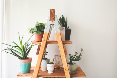 ladder plant shelf