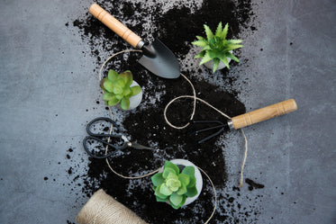 landscape image of succulents and gardening tools