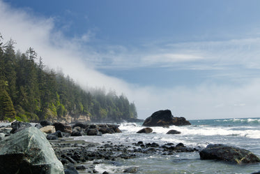 landscape of trees rocks and water shoreline