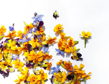 landscape scattered yellow and purple petals