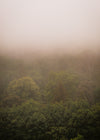 landscape view of green trees covered in fog