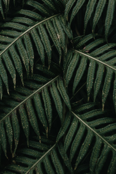 large leaves of a green plant overlaid