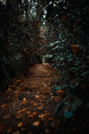 leafy path in the woods