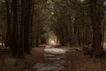 leafy winter forest path