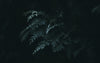 light on the tips of a fern leaf in the dark