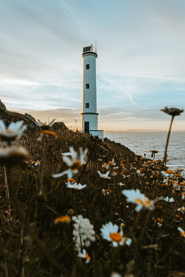 lighthouse surrounded by daisies