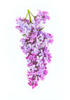 lilac flowers against white background