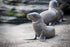 Free Little Sea Lion On Beach Photo — High Res Pictures