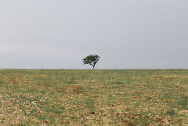 lonely tree in a large field