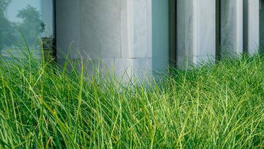 long grass growing in city