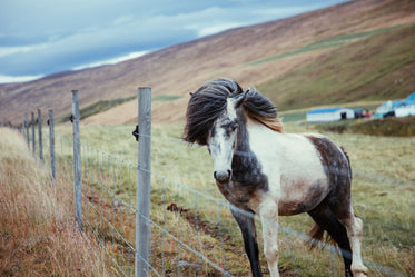 long haired horse by fence