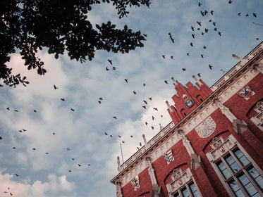 look up at birds flying over a red and white building
