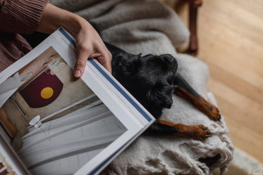 looking down at hand holding a book with puppy