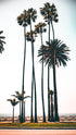 los angeles palms by boardwalk