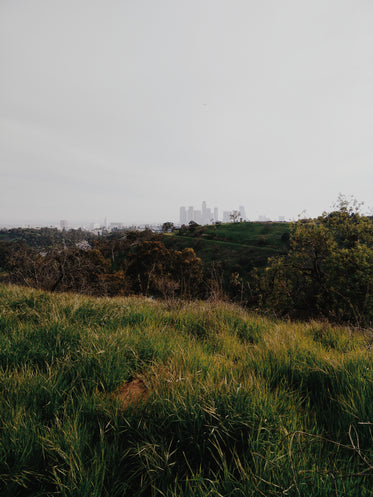 los angeles skyline from park