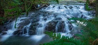 lush ferns and mossy branches drape over rocky waterfall