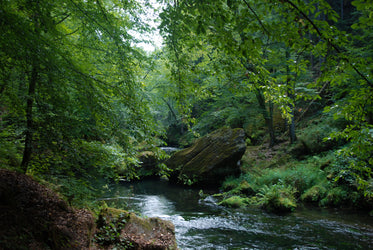 lush forest above a flowing river