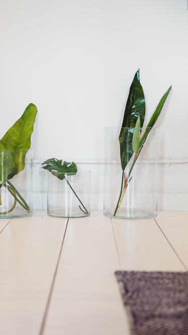 lush large green leaves in glass jars
