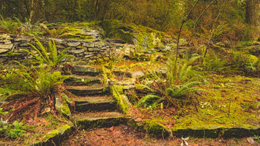 lush moss and ferns cover natural flagstone stairs