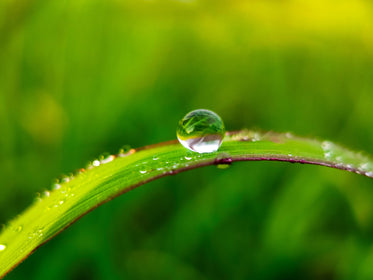 macro photo of a water drop on a blade of grass