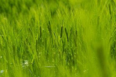 macro view of vibrant green grass in focus