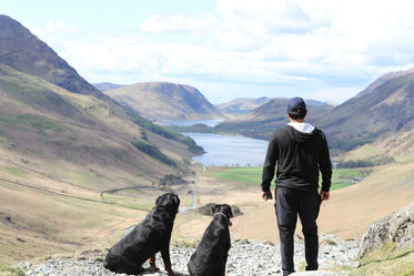 man and dogs admire valley