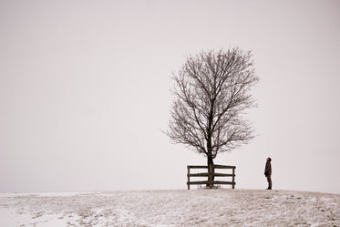 man and tree on snowy hilltop