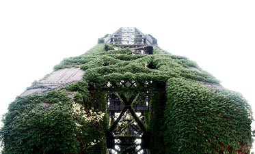 metal tower covered in a green vine