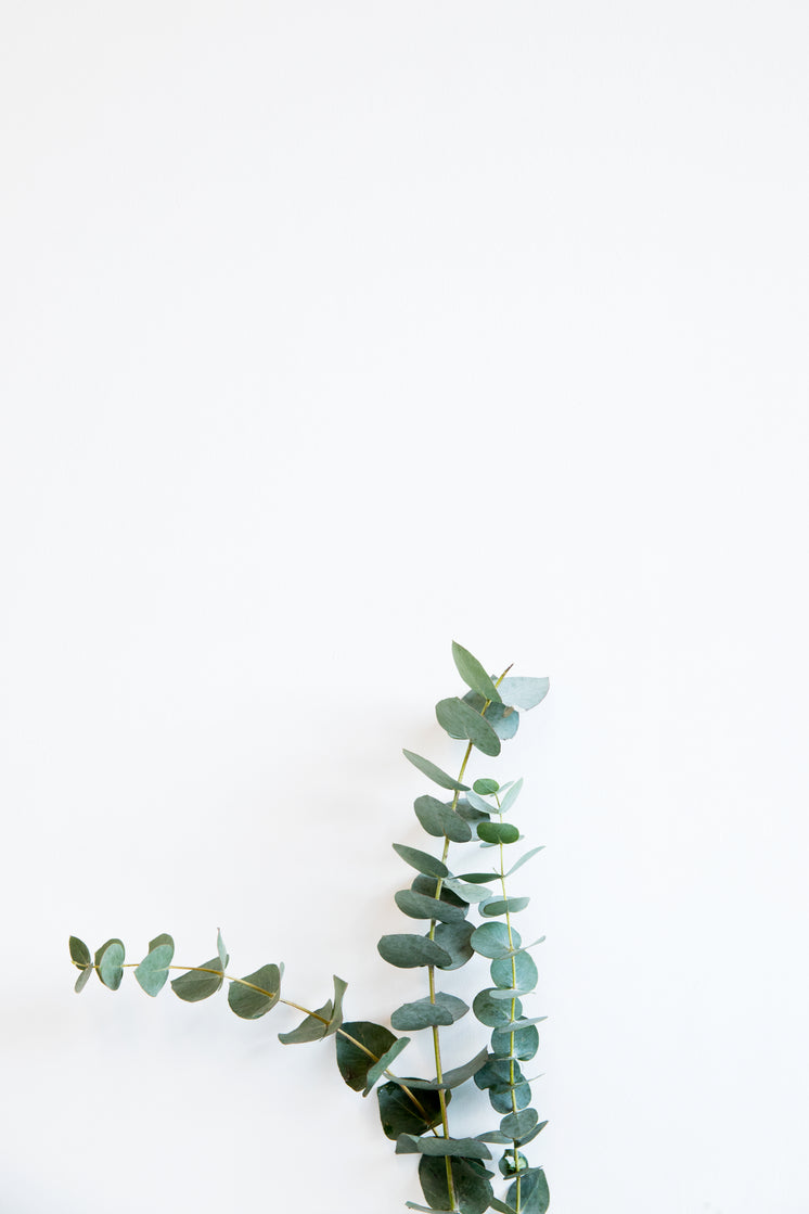 Minimal Image Of Tall Plant Against The Wall