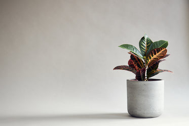 minimalist red and green houseplant on grey background