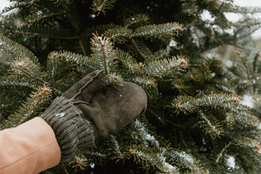 mitts and pine tree