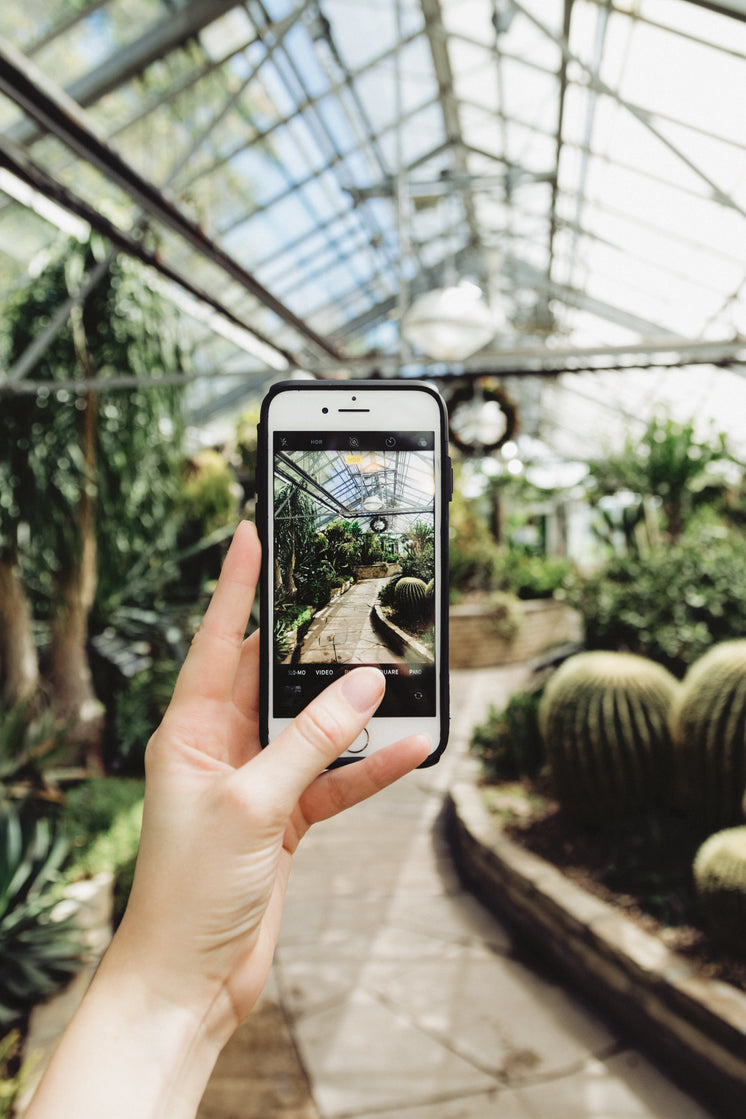 Mobile Phone Photography In Greenhouse